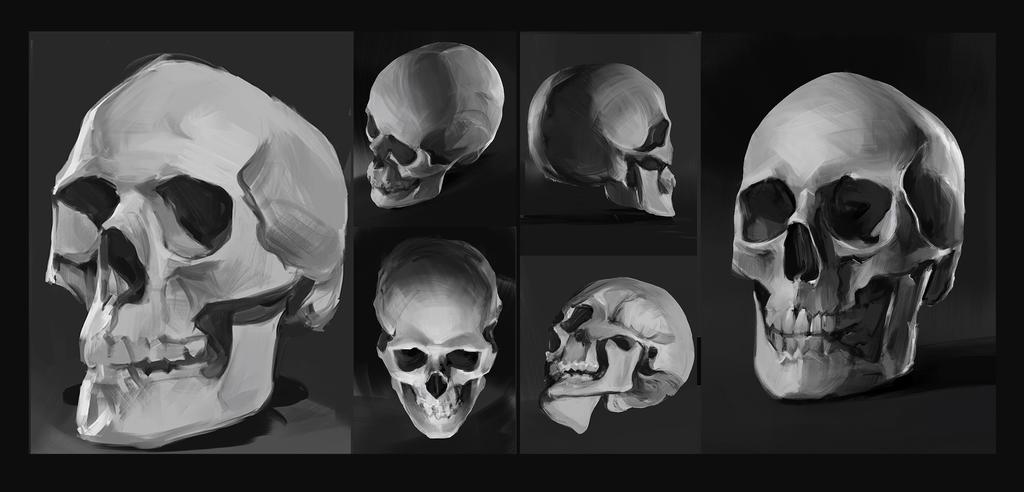 Skulls studies by SunnyJu