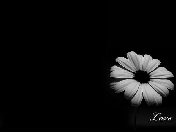 Wallpaper black love by fotojenny