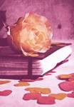 Romantic story by fotojenny