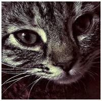 Misa portrait by fotojenny