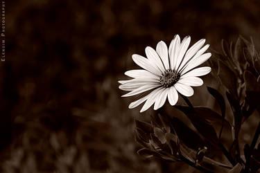 Flower by Elena-Elendim
