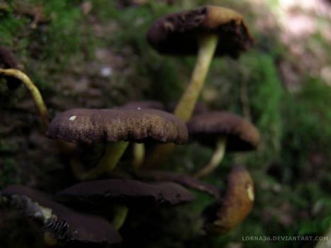 The Meandering Mushrooms