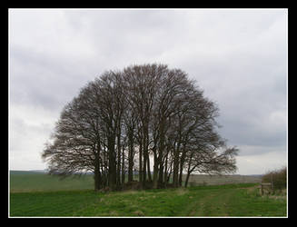 Trees on the Tumulus by Lorna36