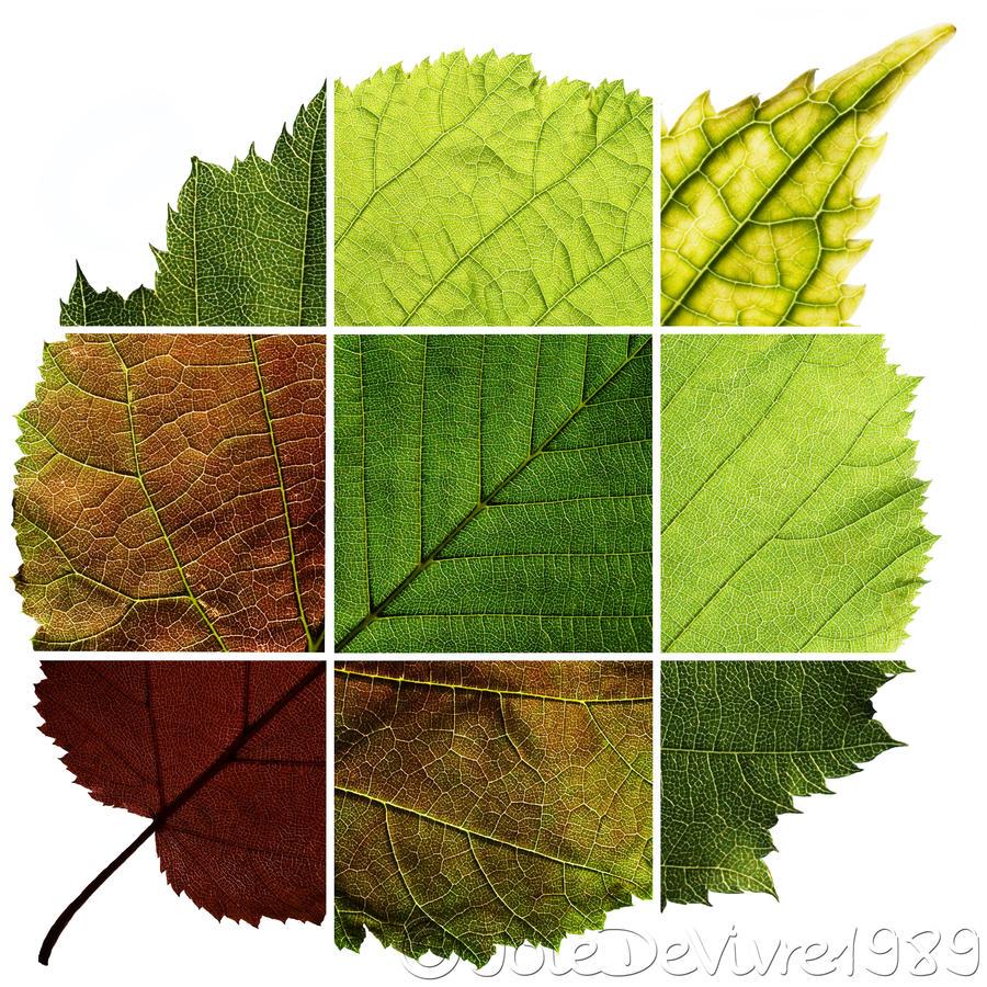 nature design leaf by joiedevivre1989 on deviantart