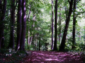 Tan-Y-Gopa Woods by Bumblewales