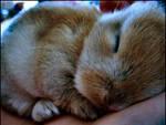 'Baby Bunny I'