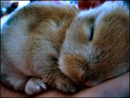 'Baby Bunny I' by kaaMari