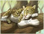 Piebald Leopard