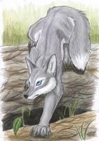 Grey Fox by Tacimur