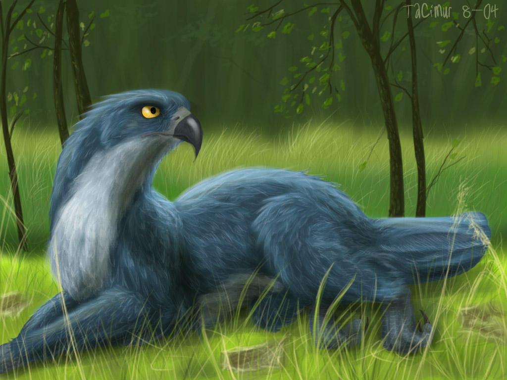 Four Legged Hawk By Tacimur On Deviantart