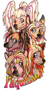 Commission Chinese Crested