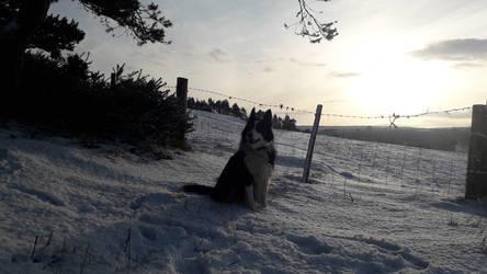 The Snow Dog by Mr-Earwig