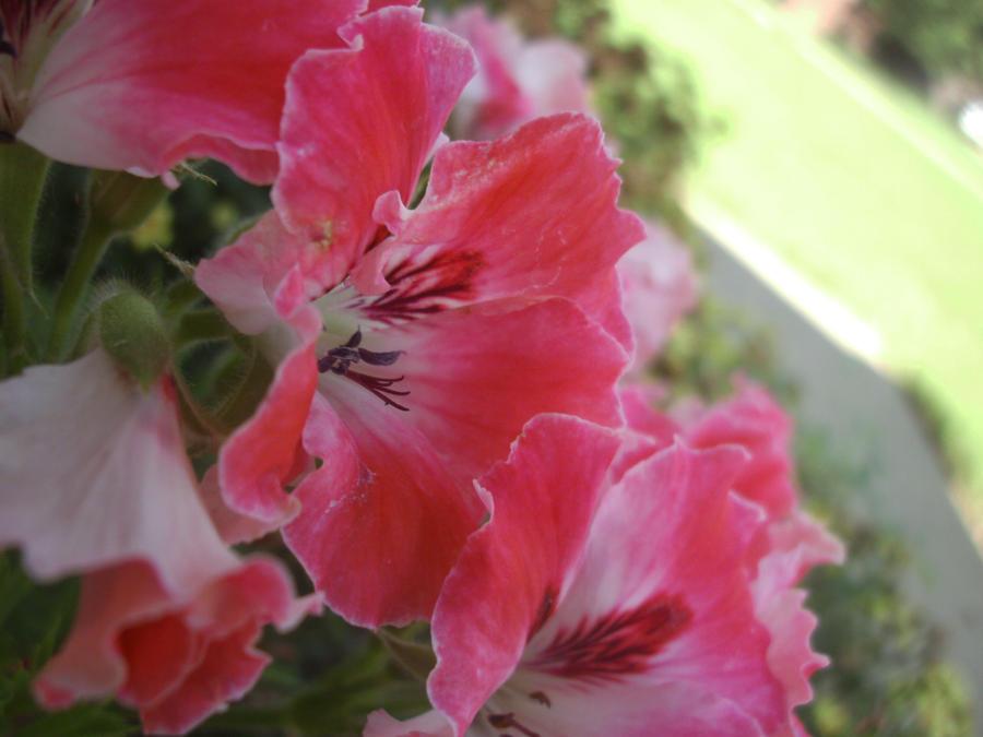 Flowers Xxx 16