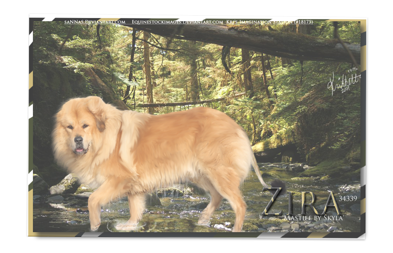 Half Dog Half Lion Zira the half lion half dog by