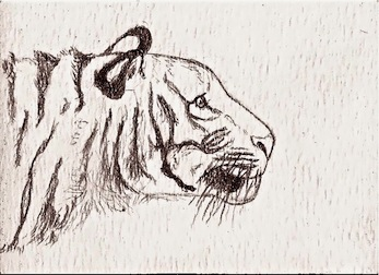 Bengal Tiger ACEO by whitetippedwaves