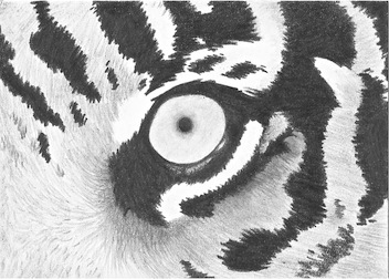 Eye of the Tiger ACEO by whitetippedwaves