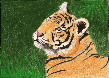 Tigress ACEO by whitetippedwaves