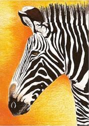 Day 23: Grevy's Zebra ACEO by whitetippedwaves