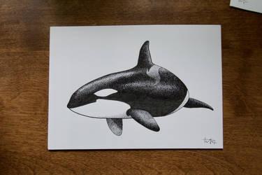 Blackfish by whitetippedwaves