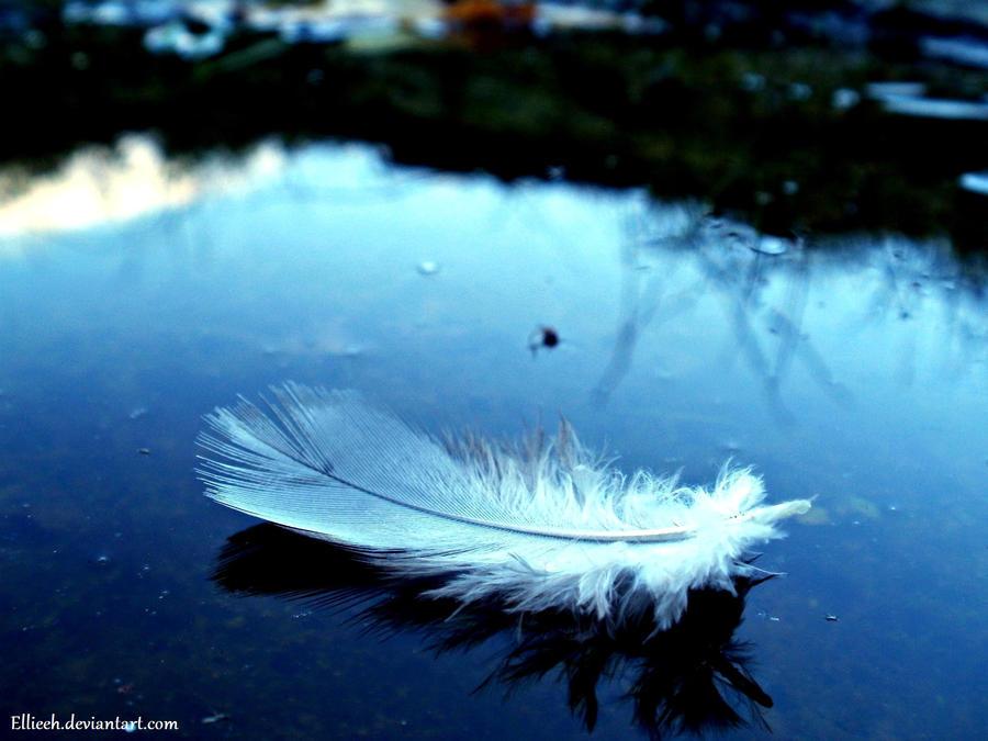fallen feather mac wallpaper - photo #2