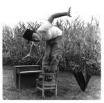 in the cornfield - 1