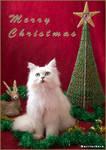 Christmas cat 2011