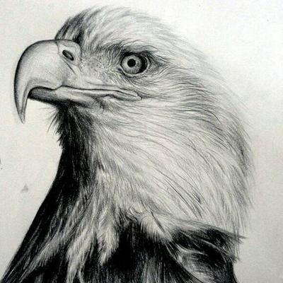 eagle pencil drawing by rianprakasa