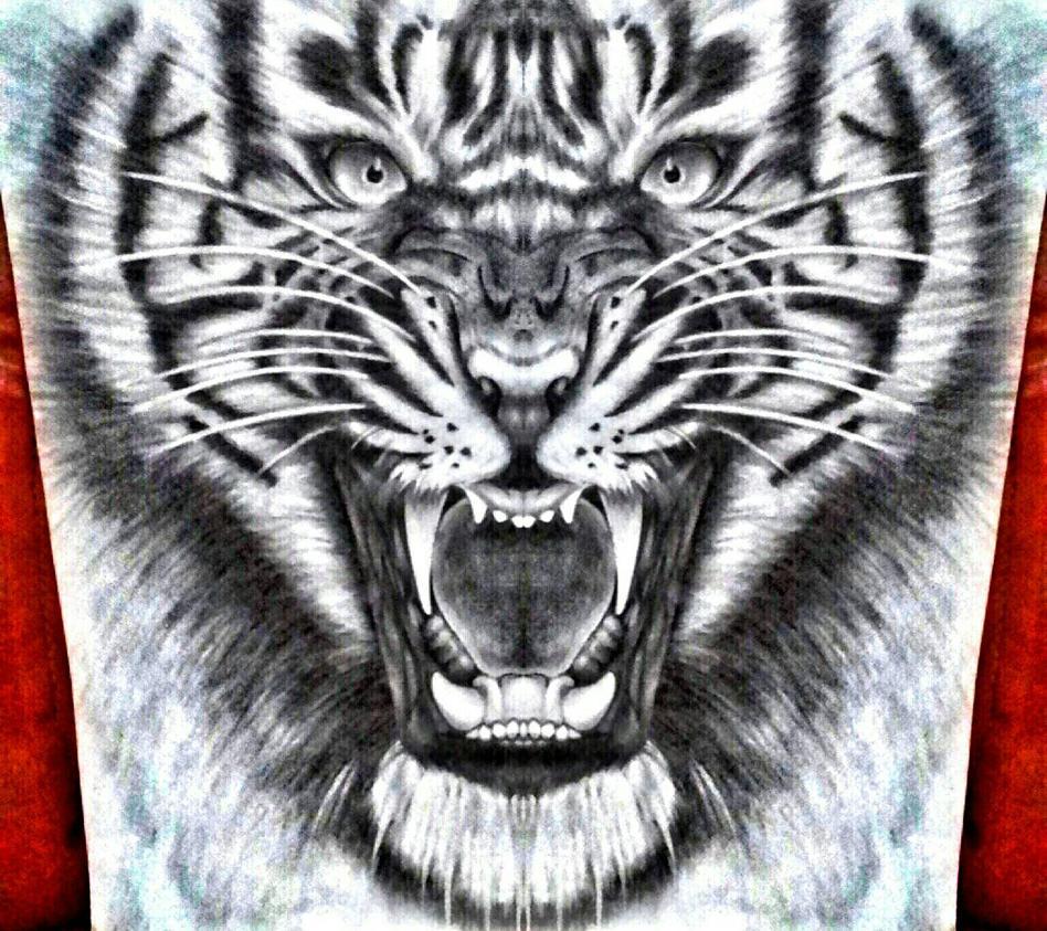tiger pencil drawing.  by rianprakasa