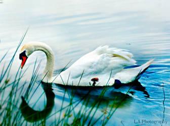 summer swan by L-A-Addams-Art