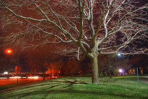 Tree and Streetlights by HDR-Club