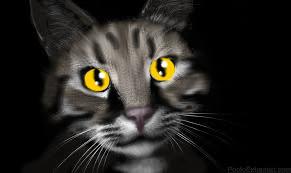 Tabby Cat by DemonaTheOperator