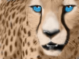 Cheetah Fade DP by DemonaTheOperator