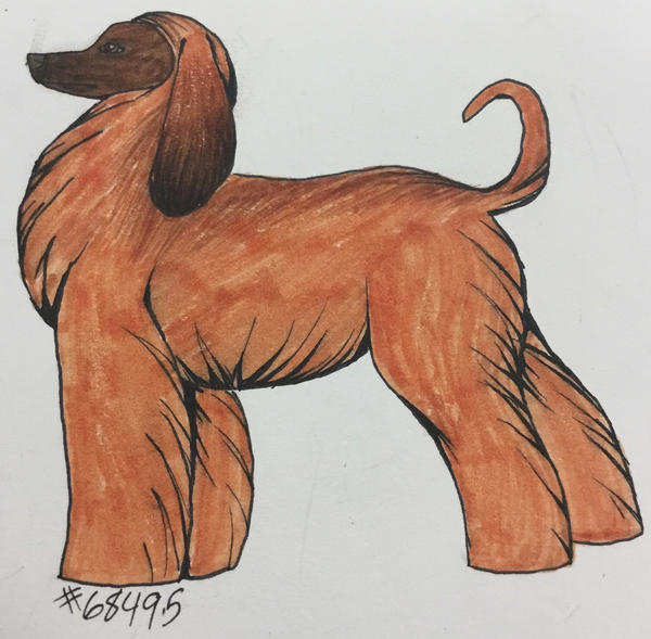Afghan Hound Drawing by DemonaTheOperator