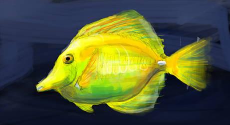 Yellow Tang sketch n color