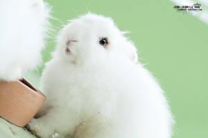 My rabbit by Korixxkairi