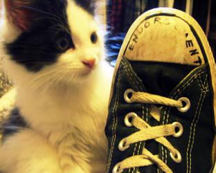 Converse Cat by WoollenPanda