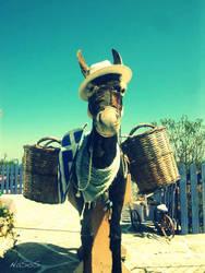 The Donkey :)