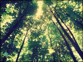 Cholomontas forest