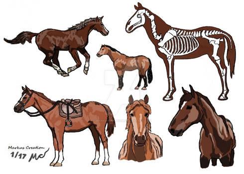 Markus Creation Horse study