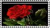 Rose lover stamp by Vampiress-Stocking