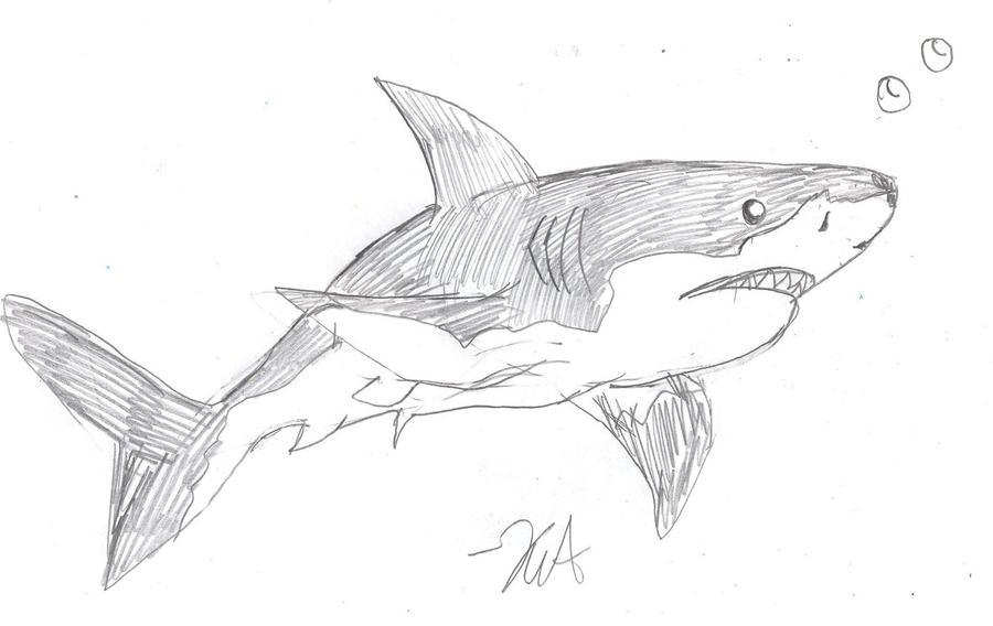 realistic shark by vampiress ailyth d5eqoun Realistic Shark DrawingRealistic Shark Drawing