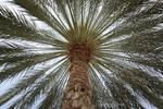 Under the palmtree
