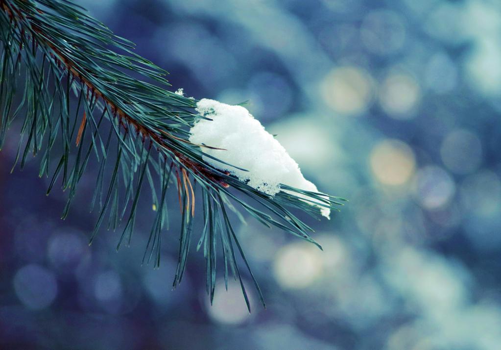 Magic of winter by borderone