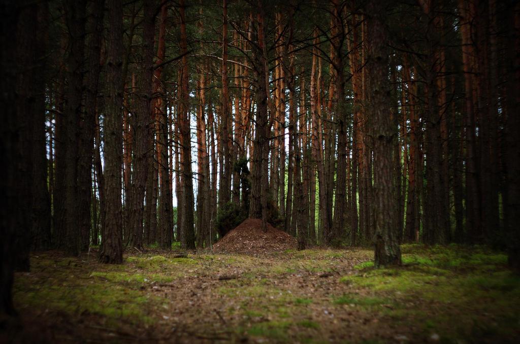 Forest kingdom by borderone