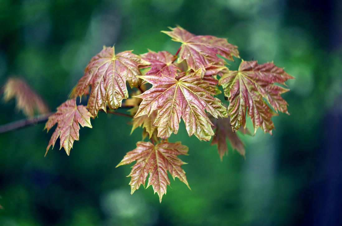 Spring Leaves by borderone