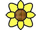 B sunflower by BohemianFlower