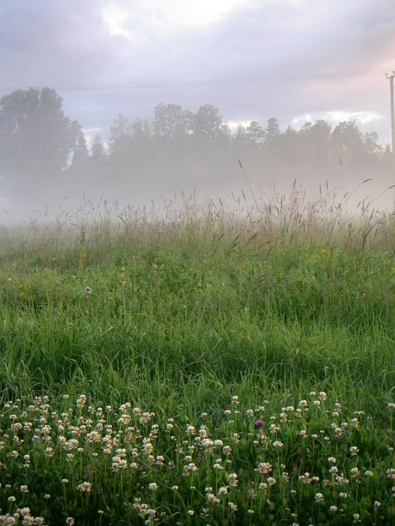 foggy field by janda