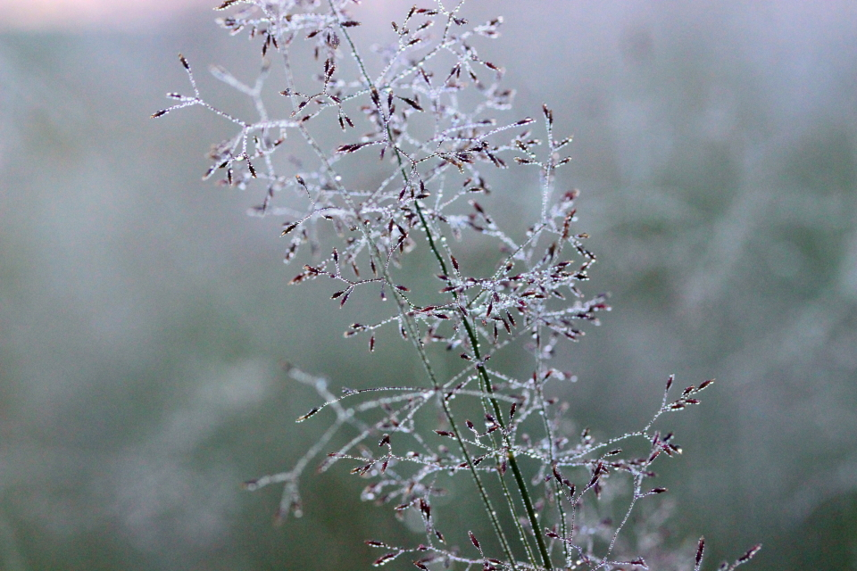 morningdew by janda