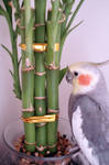 bamboo haku
