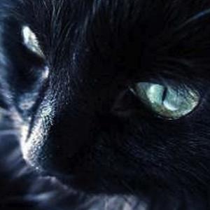Kittycheetah's Profile Picture